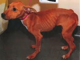 skinnydogdonate