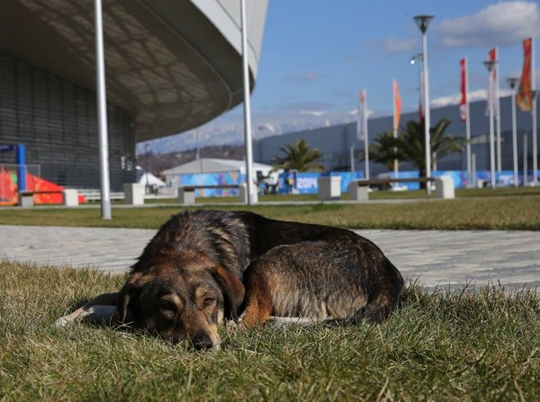 la-ol-sochi-olympics-kill-stray-dogs--20140206-001