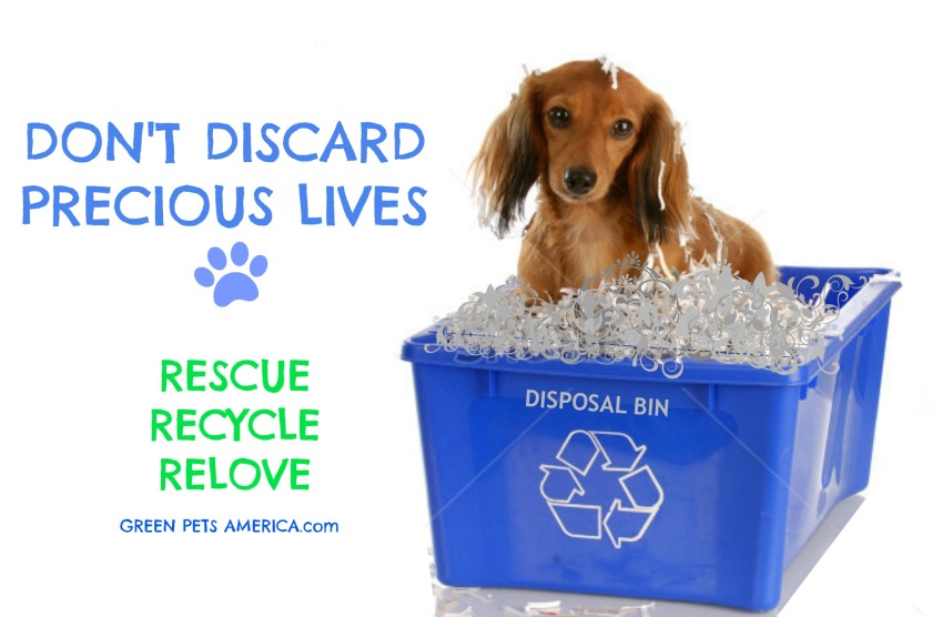 rescue recycle rehome picture