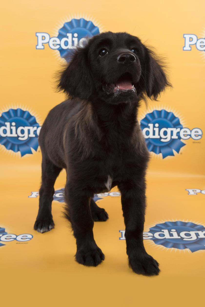 Betty-starting-line-up-PuppyBowl-11-FLUFF1