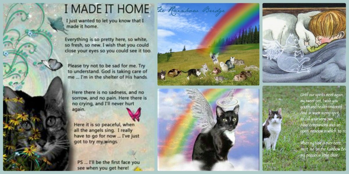 The Gallery For Gt Rainbow Bridge Poem For Cats